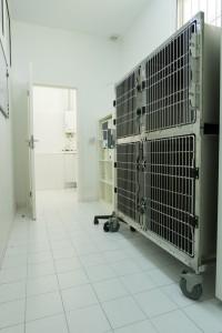 Clinica-veterinaria-quinta-da-capela-19